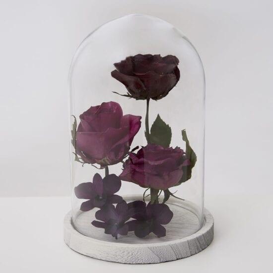 Compilatie van bloemen in stolp